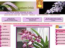 Specializing in Arantheras, Arandas, Arachnis, and Oncidiums.  Artwork and consulting services offered.  Established 1982.  Chennilode, Thiruvananthapuram, Kerala, India.